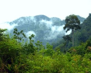 The Borneo Rainforest